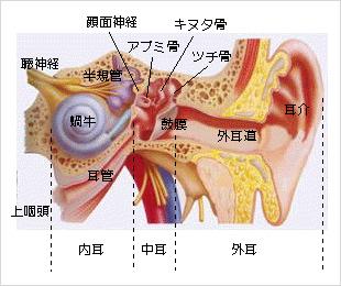 外耳道炎・外耳道湿疹・外耳道真菌症