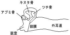 ・鼓室形成術Ⅰ型